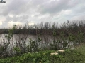 hurricane irma impact cayo coco 4